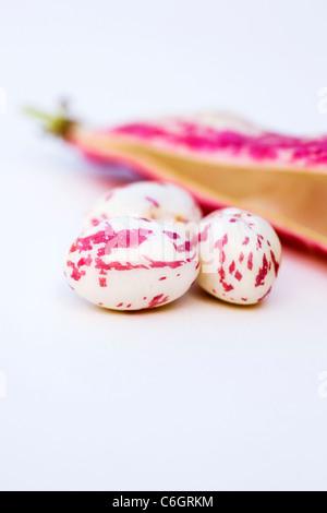 Phaseolus vulgaris. Borlotti beans and pod on a white background. - Stock Photo