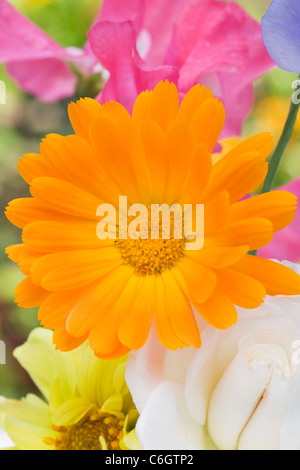 Calendula officinalis, Lathyrus odoratus, Dahlia,and Rosa.Summer flowers in a vase. - Stock Photo