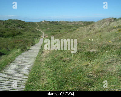 BRAUNTON BURROWS in north west Devon, England showing the boardwalk through the dune system. Photo Tony Gale - Stock Photo