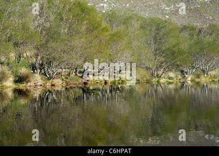 trees reflected in lake, Silvermine Walks, Table Mountain National Park, Cape Town, Western Cape, South Africa - Stock Photo