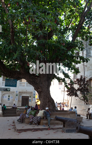 Men relaxing in shade of massive tree in old town square, Lamu Island, Kenya, Africa - Stock Photo