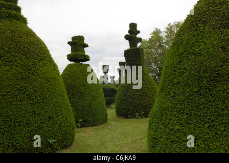 Clipsham Yew Tree Avenue, a unique collection of 150 clipped yew trees, most over 200 years old. Clipsham, Rutland, - Stock Photo