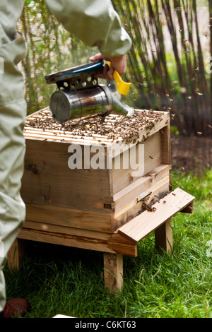 Bee Keeping - Stock Photo