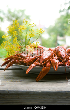 Boiled crawfish garnished with dill - Stock Photo