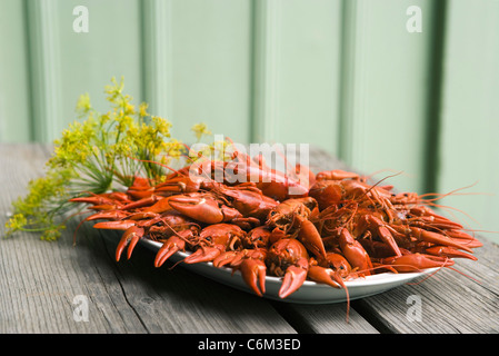Boiled crawfish garnished with fresh dill - Stock Photo