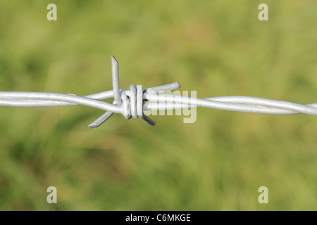 Barbed Wire against green background - Stock Photo
