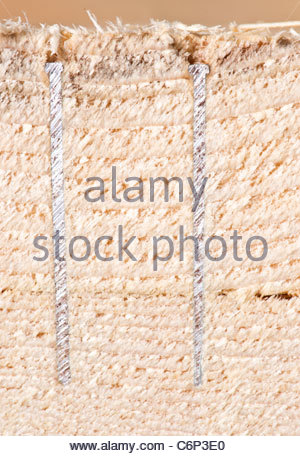 Two airtool nailer type nails cut in half by a mitre saw extreme close up - Stock Photo