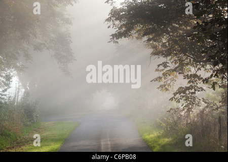 Sun rays through Horse chestnut trees on a country road in early morning misty English countryside - Stock Photo