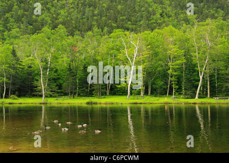 Wiley House Pond, Crawford Notch, North Conway, White Mountains, New Hampshire, USA - Stock Photo