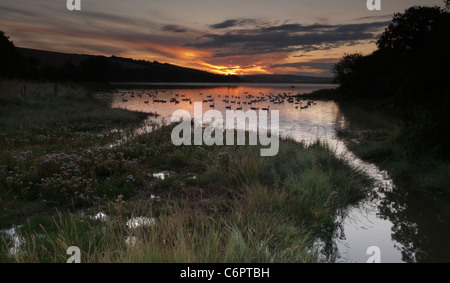 Flock of Canada Geese at Sunrise along the Kingsbridge Estuary near Salcombe - Stock Photo