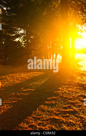 Sun shining through pine trees near Lake of Two Rivers in Algonquin Park, Ontario, Canada. Intentional lens flare. - Stock Photo