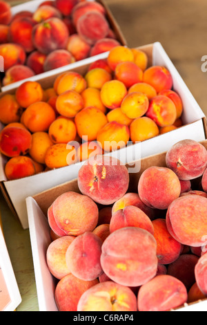 Fresh peaches and apricots fruits for sale on farmers market - Stock Photo