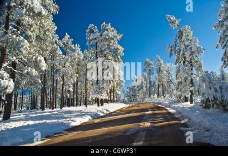 Highway 288 on the Mogollon Plateau with heavy snow. Arizona. - Stock Photo