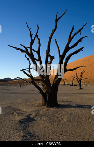 Dead camelthorn trees at Deadvlei, one of the most striking valleys at Sossusvlei in Namibia, stand out against - Stock Photo