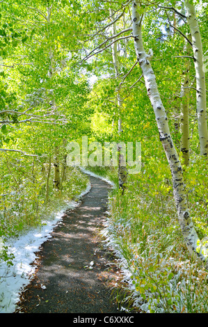 Trail through a forest of Aspens after a fresh snowfall near June Lake, California in the Eastern Sierra - Stock Photo
