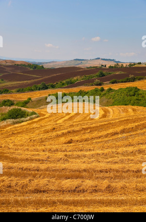 Wheat fields after harvest - Stock Photo