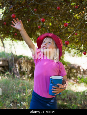 Girl picking wild plums outdoors - Stock Photo
