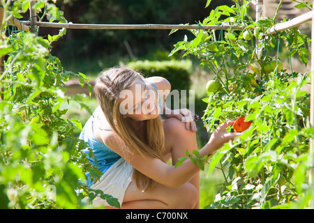 Girl picking tomatoes outdoors - Stock Photo