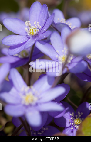 Close up of purple flowers - Stock Photo