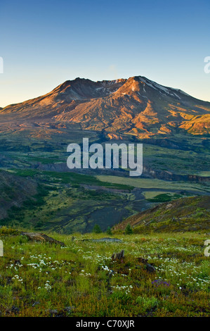 Mount Saint Helens from Boundary Trail near Johnston Ridge Visitor Center Mount St Helens National Volcanic Monument Washington Stock Photo