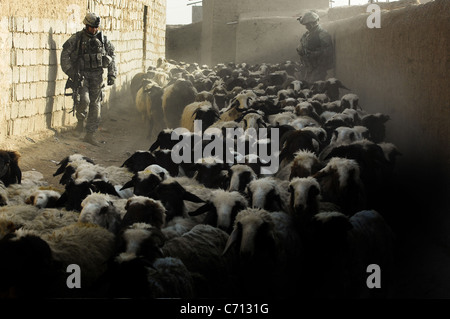 U.S. Army soldiers watch as a flock of sheep moves past them during a cordon and search mission for high value insurgents - Stock Photo