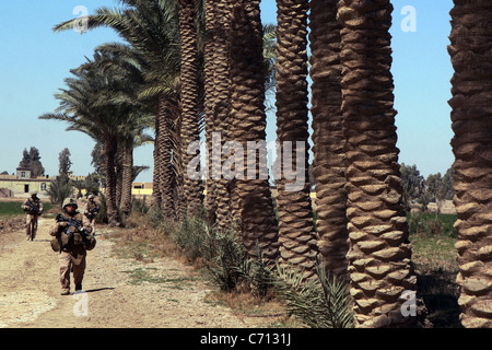 U.S. Marines and Iraqi police officers walk down a road edged with date palms as they patrol on foot outside of - Stock Photo