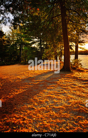 Sunset at shore of Lake of Two Rivers in Algonquin Park, Ontario, Canada - Stock Photo