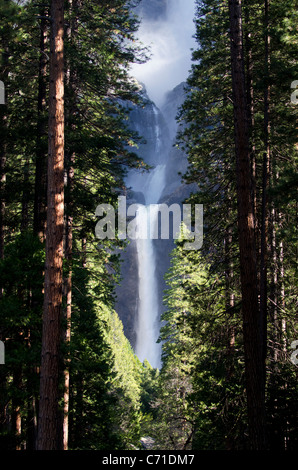 Lower Yosemite Falls pictured through the trees lining the path to the viewing area in Yosemite National Park, California. - Stock Photo