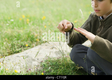 Boy sitting on grass, playing with ladybug - Stock Photo