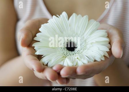 Woman holding gerbera daisy, cropped - Stock Photo