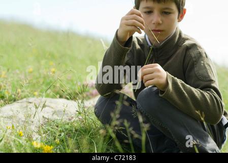 Boy looking at ladybug crawling on twig - Stock Photo