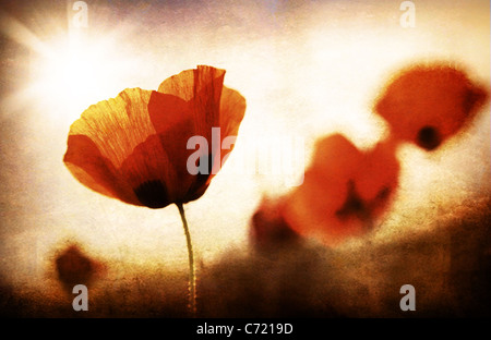 Red poppy flowers meadow, grungy style photo - Stock Photo