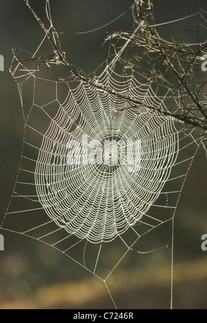 Spider's web in the wilderness of Malingsbo-Kloten Nature Reserve, Sweden - Stock Photo