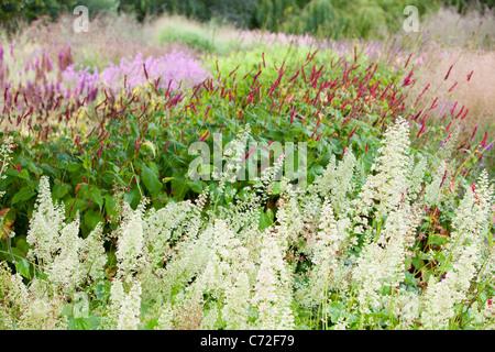 The Millenium Garden at Pensthorpe nature reserve, Norfolk, UK, was designed by Piet Oudolf, - Stock Photo