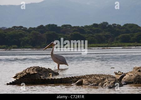 Crocodiles, Chamo lake, Arba Minch, Ethiopia - Stock Photo
