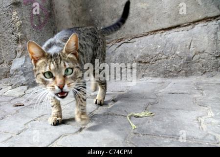Crazy Cat - Stock Photo