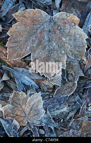Frost-covered leaves along the shore of the Arrow River near Arrowtown, New Zealand - Stock Photo