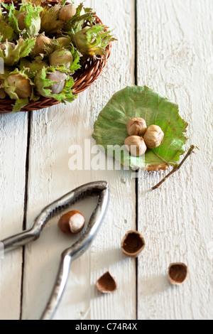 Fresh Unripe Hazelnuts with Nutcracker on White Wood - Stock Photo
