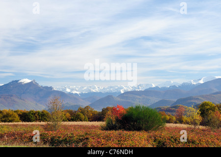 Distant view of snow topped Pyrenees mountain chain with autumnal bushes and trees in the foreground, Gascony, France, - Stock Photo