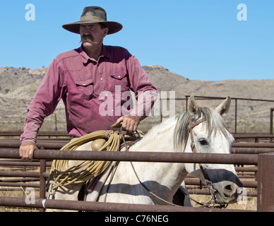 Cowboy watching cattle from shipping pens during a roundup on a West Texas ranch. - Stock Photo