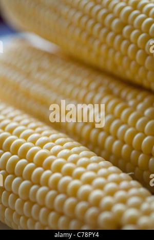 corn on a cob close-up - Stock Photo