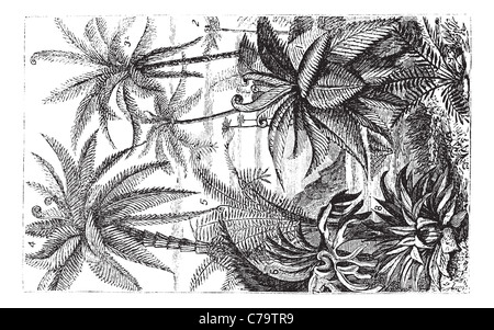 Arborescent Ferns during the Carboniferous Period, vintage engraved illustration. Trousset encyclopedia (1886 - - Stock Photo