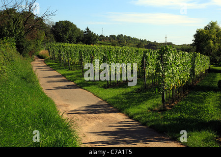 D-Heidelberg, Neckar, Rhine-Neckar area, nature reserve Neckartal-Odenwald, Bergstrasse, Odenwald, Baden-Wuerttemberg, - Stock Photo