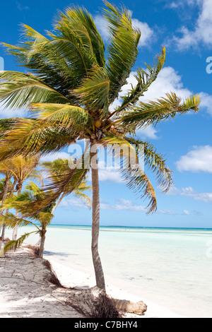 Coconut trees and crystal water, Cayo Guillermo (Jardines del Rey), Ciego de Avila, Cuba - Stock Photo