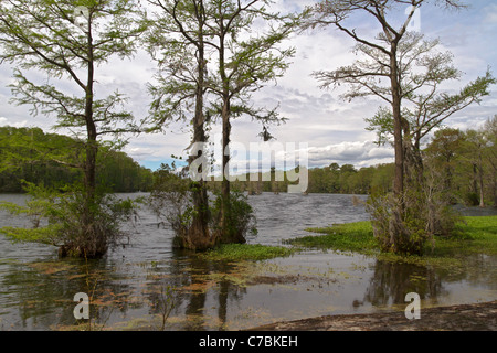 Greenfield Lake in Wilmington, North Carolina - Stock Photo