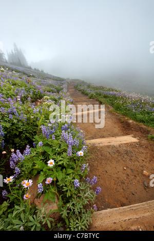 Trail through field of wildflowers in fog, Edith Creek Basin, Paradise, Mount Rainier National Park, Washington, - Stock Photo