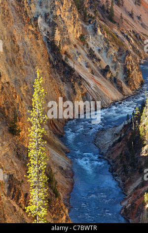 Yellow cliffs above the Yellowstone River at bottom of Grand Canyon of the Yellowstone, Yellowstone National Park, - Stock Photo