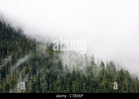Clouds interspersed with old growth forested ridges, Mount Rainier National Park, Washington, USA - Stock Photo