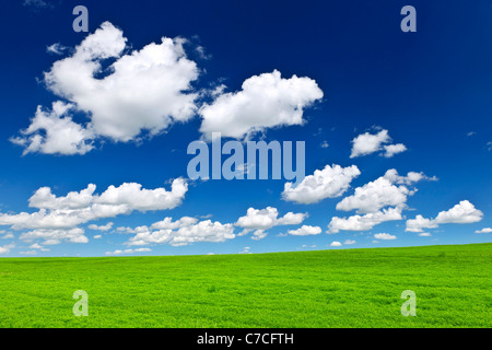 Lush green lentil and wheat fields under blue sky in Saskatchewan prairies of Canada - Stock Photo
