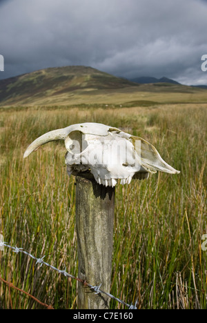 Skull of a sheep on a wooden fence post with barbed wire. - Stock Photo